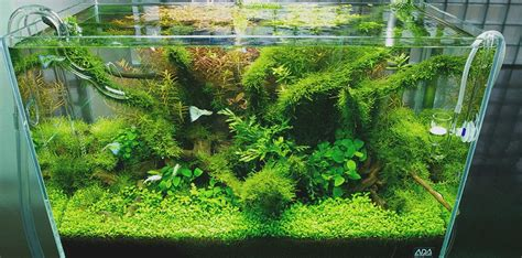 aquascape style nature style aquascape interior design ideas