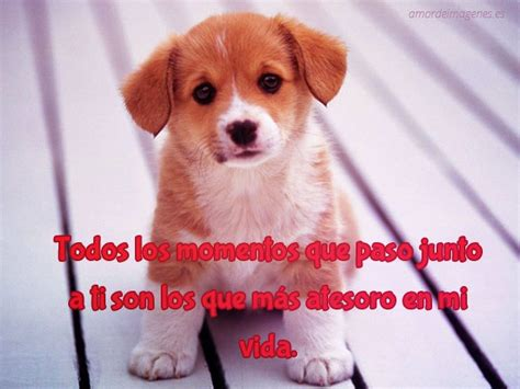 imagenes de amor tierno image gallery imagenes de perros tiernos