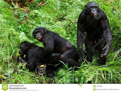 mobile animal pornobile animal photos of human mating
