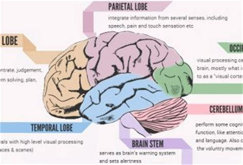 human brain mapping human brain mapping page 2 deja vu