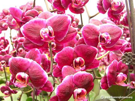 floral pictures orchid picture 5