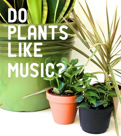 the effect of music on plant growth dengarden