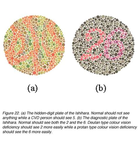color sensitivity test color perception by michael kalloniatis and charles luu
