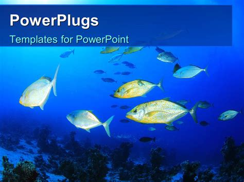 Fish Powerpoint Template Powerpoint Template Colorful Fishes Swimming In The Water 12374