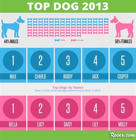 names for dogs top 2013 rover s most popular names
