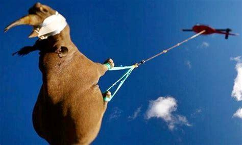 rinoceronte volante egemonia regno animale l italia dal panda al
