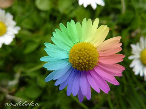 flower pic pack of many rainbows images rainbow flowers hd wallpaper