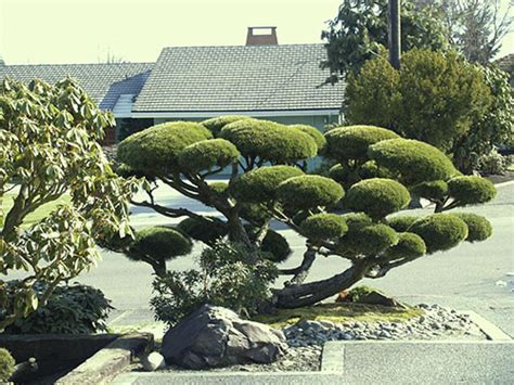 Garden Design With Pruning Plants Japanese Garden Tree Pruning Japanese Botanical Bonsai Design