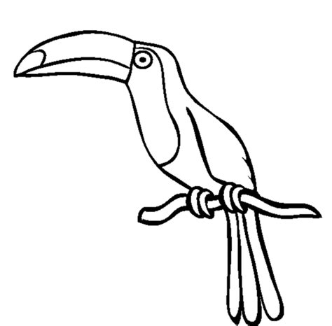 coloring page of a toucan bird toucan outline cliparts co