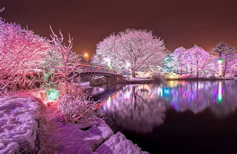 lights at winter lights at bowring park photograph by follett