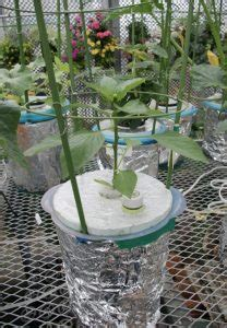 Pot Kantong Tanaman Sayuran 30 Liter penyangga tanaman no 6 60 cm jual tanaman hias
