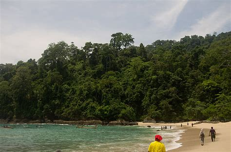 Teh Hijau Mutiara pantai teluk hijau mutiara tersembunyi di banyuwangi