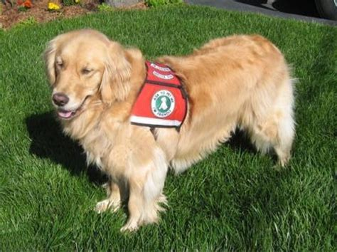 diabetes service dogs service dogs