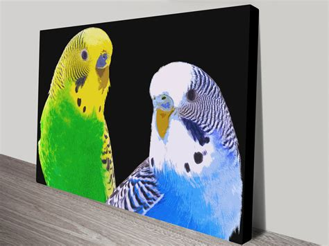 melbourne designs budgie and two budgies canvas prints wall flemington melbourne