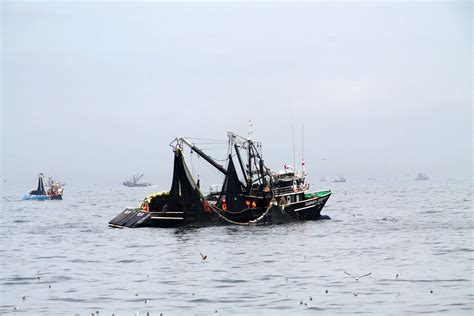 peru seafood fishing industry companies d j info fishmeal prices in peru continue to rise as anchovy season