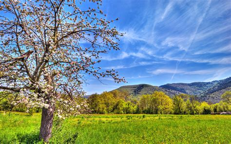 spring landscaping spring landscape wallpapers and images wallpapers
