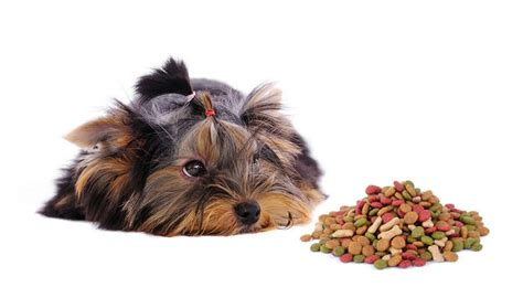 best food for puppies best food for yorkies how what to feed terriers top tips
