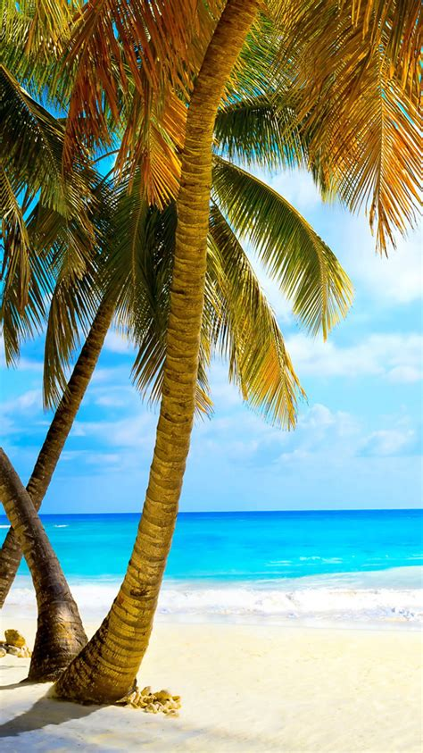 tropical palm trees tropical with palm trees hd iphone 6 wallpaper