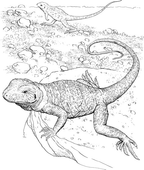 armadillo lizard coloring page free lizard coloring pages