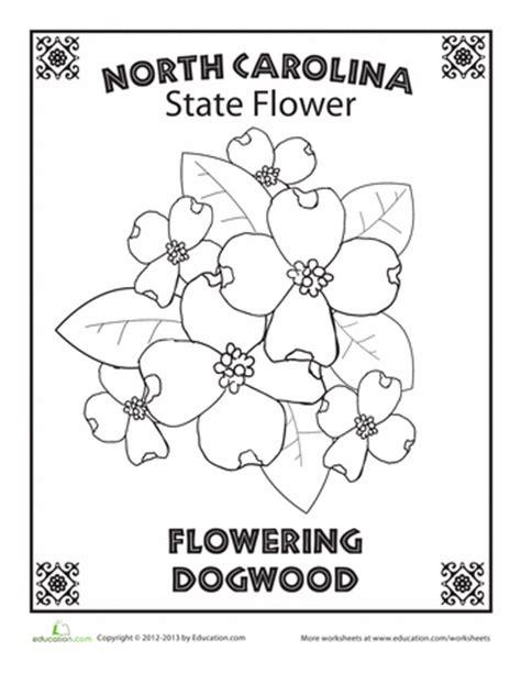 Carolina Worksheets by Carolina State Flower Carolina And Worksheets