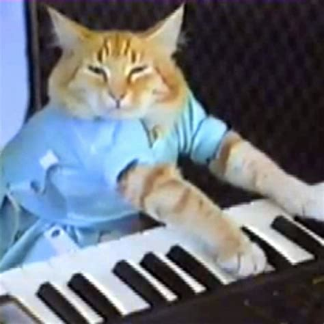 keyboard cat tutorial keyboard cat know your meme
