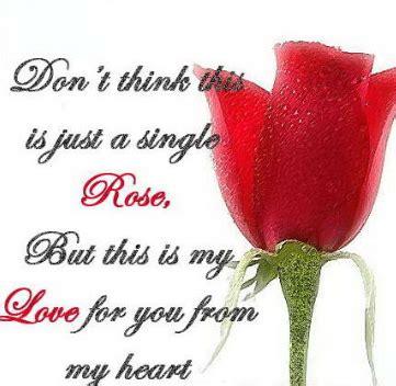 gambar bunga mawar  kata kata romantis