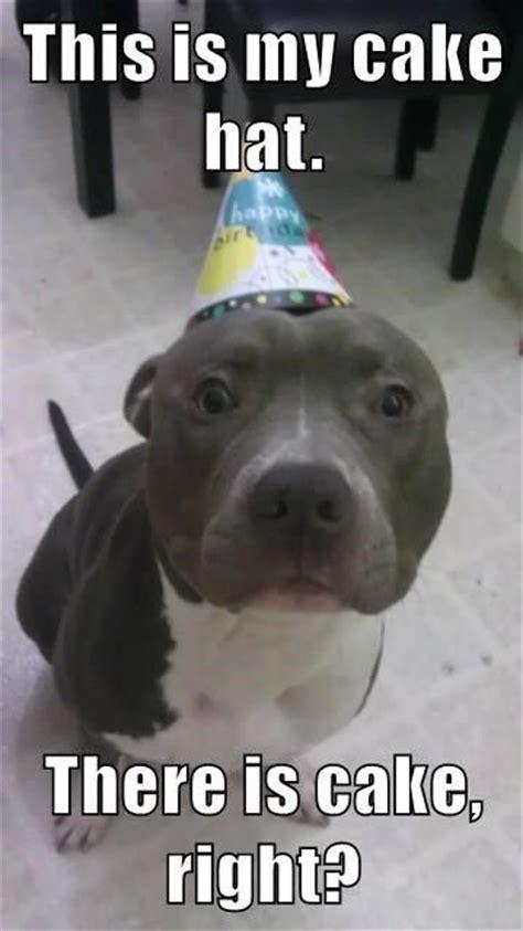 Birthday Cake Dog Meme - the 25 best happy birthday dog ideas on pinterest happy