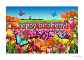 Tulip Wall Stickers quot happy birthday tulips holland quot greeting cards by