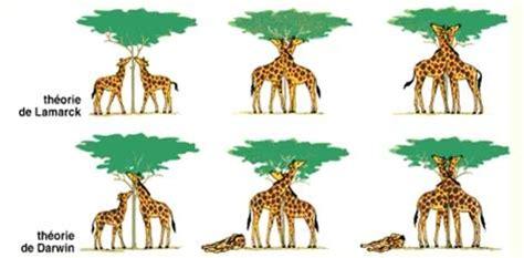 imagenes de las jirafas de darwin lo que te hicieron creer sobre la evoluci 243 n recomendado