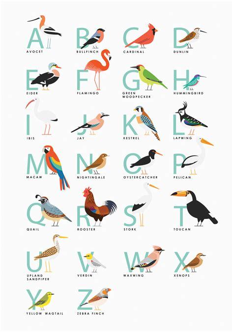 4 Letter Birds