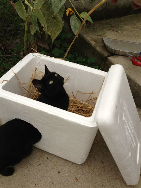 quick  easy ideas   cost outdoor cat shelters