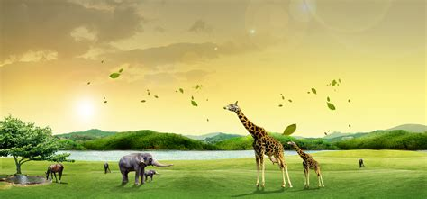 zoo posters animals water trees background image