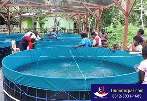 Jual Kolam Terpal Ikan Koi inilah alasan budidaya koi lele nila di kolam terpal