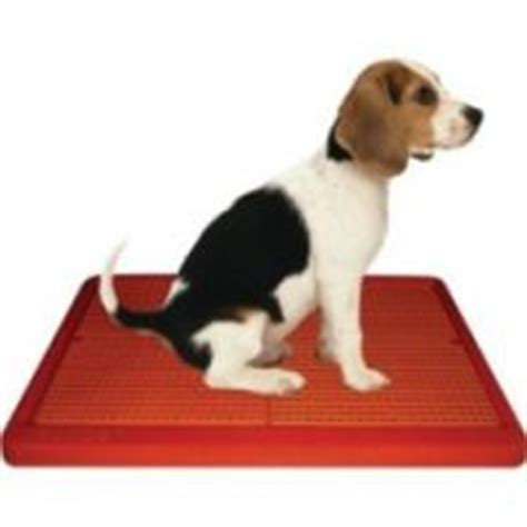 how to potty a puppy in the winter the indoor potty find out how it can help you and your tips you can use