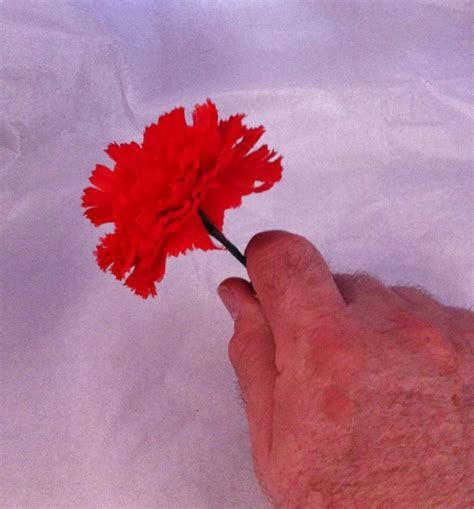 color changing carnations color changing flower viking mfg co