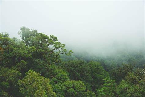 jungle canopy jungle canopy wall mural milexa