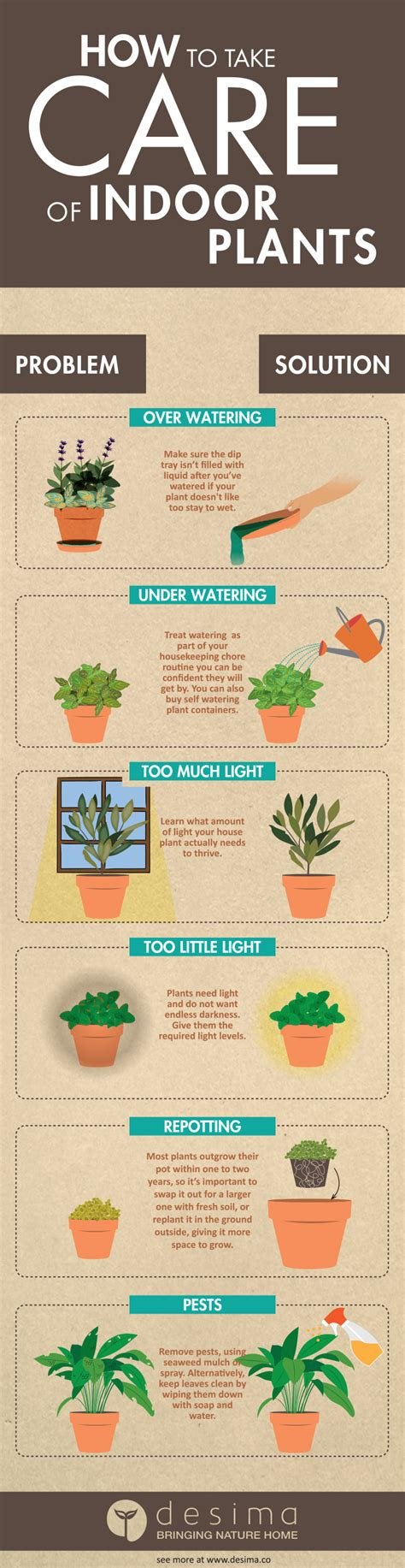 best indoor house plants a guide to greener room and greener life your market garden