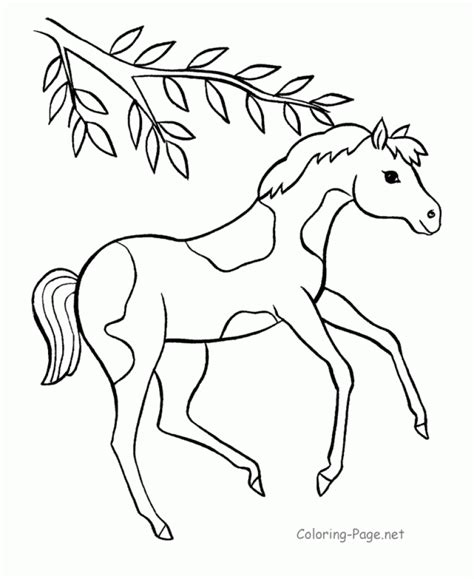 coloring pages of baby horses cute baby zebra coloring pages coloring pages of cute