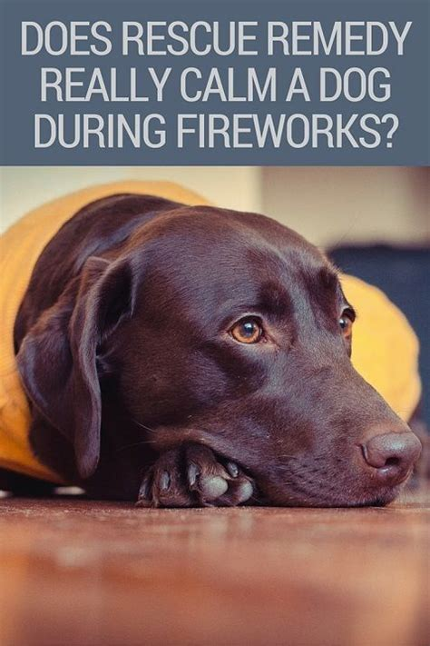 rescue remedy dogs does rescue remedy really calm a scared of fireworks