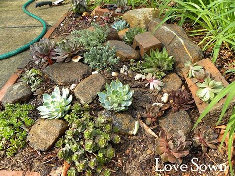 Rock Garden Succulents 10 Best Images About Rock Garden On
