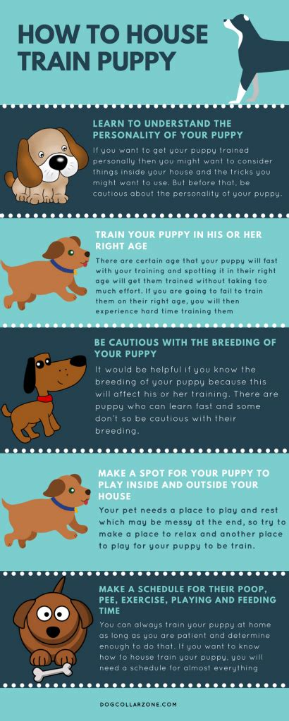 how to house train a small dog how to house train puppy infographic dog collar zone
