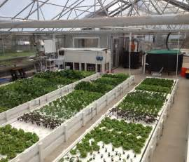 commercial aquaponic farming how it is possible to