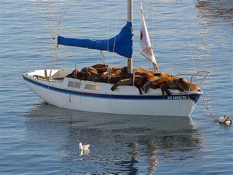 file seal boat jpg wikimedia commons - Seal Boat
