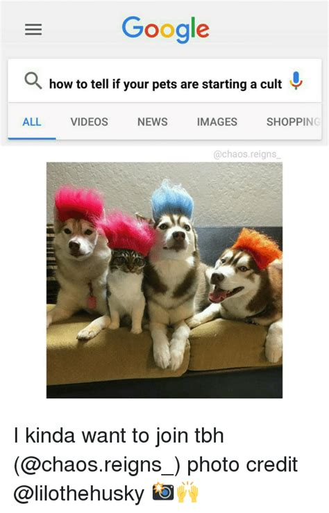 how to if your is a how to tell if your pets are starting a cult all images news shopping