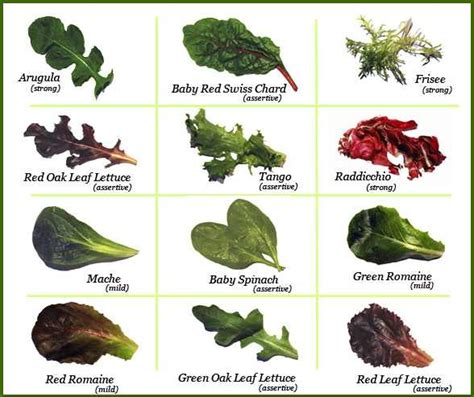 different type of leafy vegetable with name leafy green salads as a course splendid recipes and more