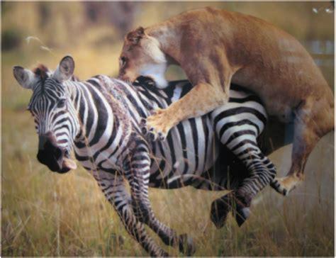 predator prey relationships ap biology