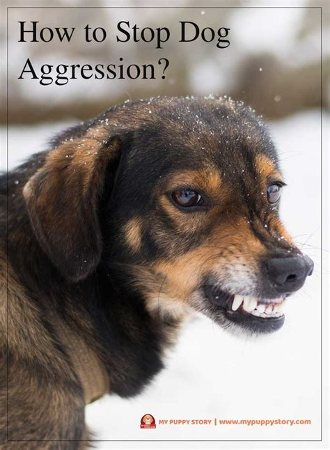 how to stop puppy aggression how to stop aggression my puppy story