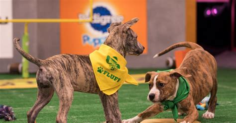 puppy bowl score puppy bowl xiv puppies go paw to paw on day