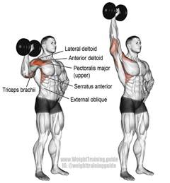 front shoulder bench press best 25 overhead press ideas on middle