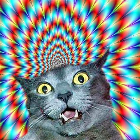download trippy cat wallpaper gallery